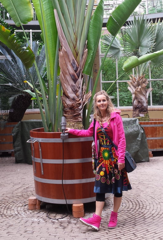 Madagascar Traveler's Palm